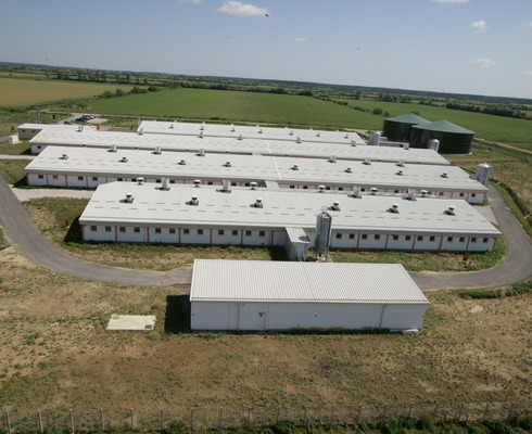 Two new contemporary pig breeding farms worth HRK 140 m opened.