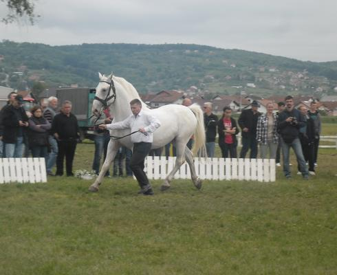 Tihomir breeds Lipizzaner horses and competes for the national team